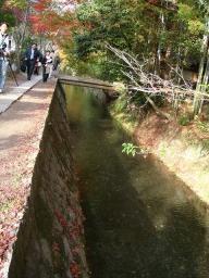 京都 旅行 紅葉 紅葉 哲学の道 西田幾多郎
