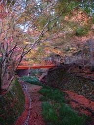 京都 旅行 紅葉 紅葉 三千院