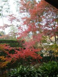 京都 旅行 紅葉 紅葉 源光庵 庭