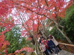 京都 旅行 紅葉 紅葉 光悦寺 入口