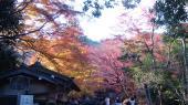 京都 旅行 紅葉 紅葉 常寂光寺 入口