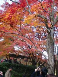 京都 旅行 紅葉 紅葉 常寂光寺