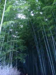 京都 旅行 紅葉 紅葉 竹林の道