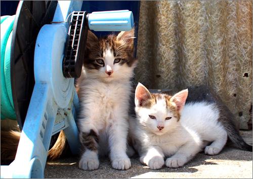 撮影中ずっと寄り添う子猫ちゃんたち