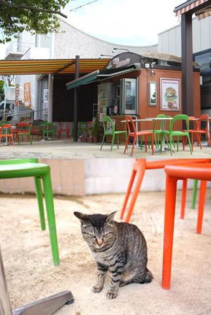 ちょこんと座るネコちゃん……(´ω`*)