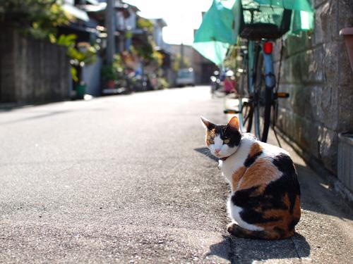 三毛猫ちゃん♪