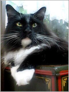 気品漂う長毛の猫ちゃん♪