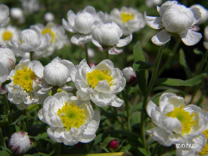 花かんざし3