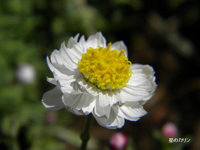 花かんざし1