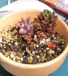 plant0001.jpg