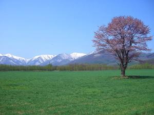 桜0905-4