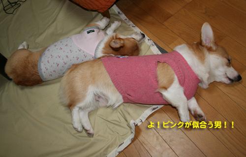 初セーター