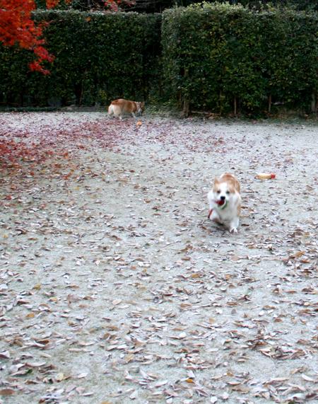 2008-1207霜と遊ぶ