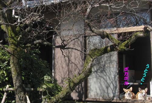 2009-0201ひなたぼっこ