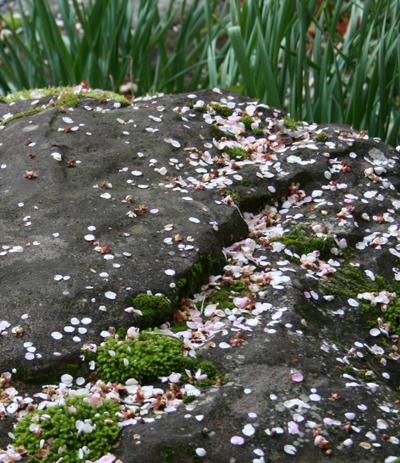 2009-0301梅の花びら