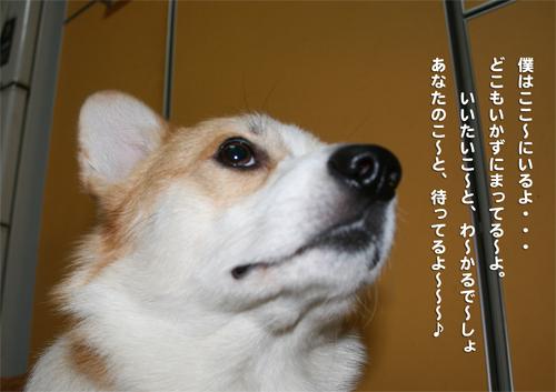 青山テルマ風リッチ