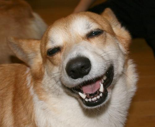 はにーの笑顔