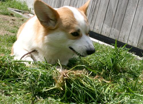 リッチ草をむしゃむしゃ
