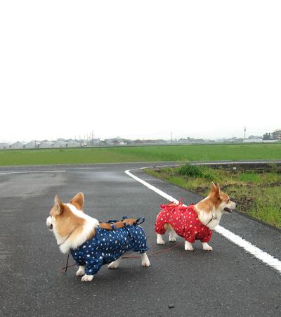 2009-0322雨上がりあっち向いてホイ