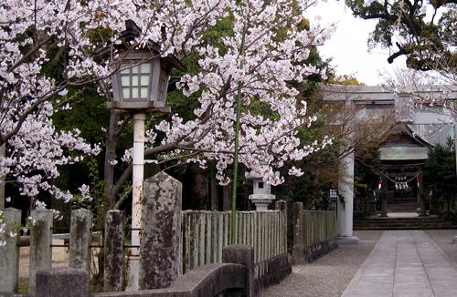 2009-0328神社の桜