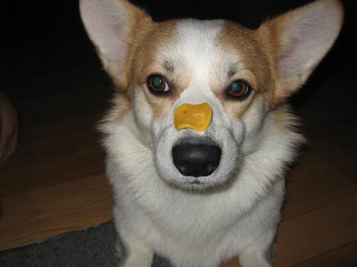リッチ鼻パク2