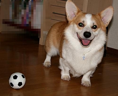リッチはサッカーボール