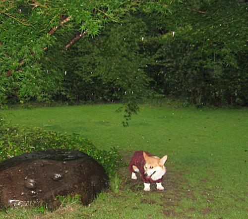 2009-0729大雨で雨宿り