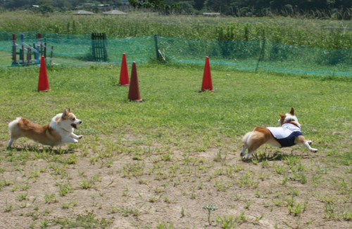 2009-0820リー君と遊ぶリッチ