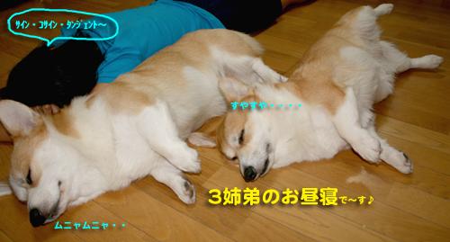 2009-09063姉弟のお昼寝