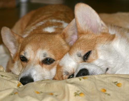 一緒の枕でお休みなさい