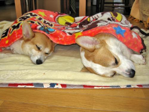 2009-1024床の毛布で寝るふたり