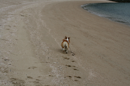 砂浜走り回る