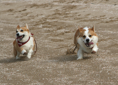 砂浜を走る2ショット