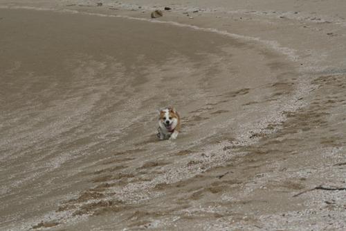 砂場に足跡いっぱい