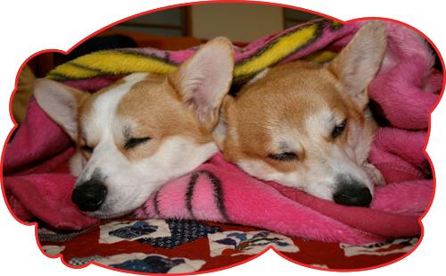 ハニーとリッチ毛布の2ショット
