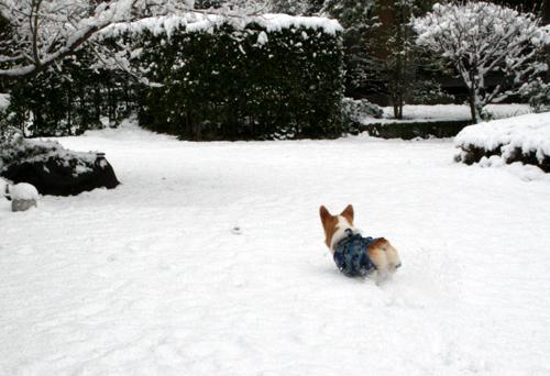 雪の中でもボール遊び