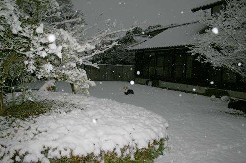 朝起きたら雪が