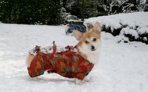 背中が雪だらけ☆ハニー