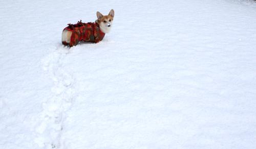 雪道を歩くハニー