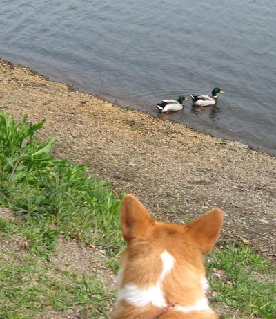 ハニーと水鳥