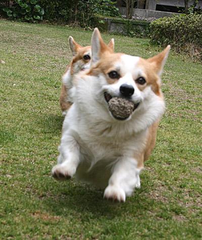 リッチとボール