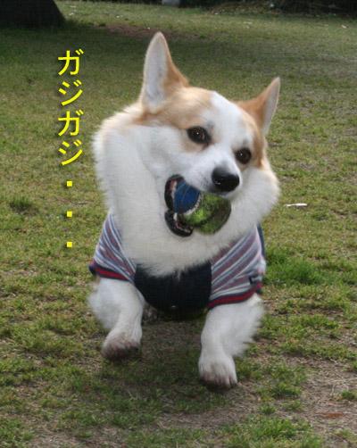 ボールをガジガジ2