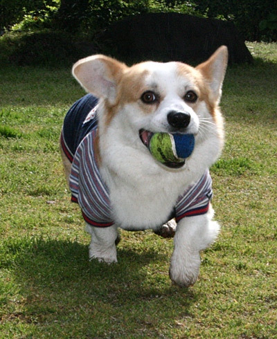 リッチと新しいボール