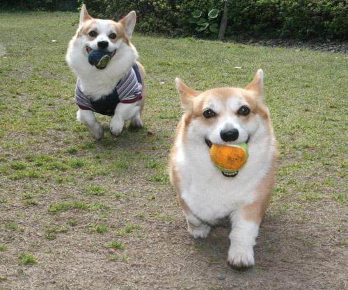 綺麗なボール