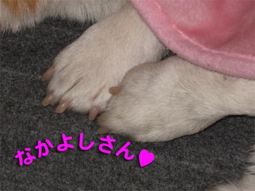 hunny2009-0108-3.jpg
