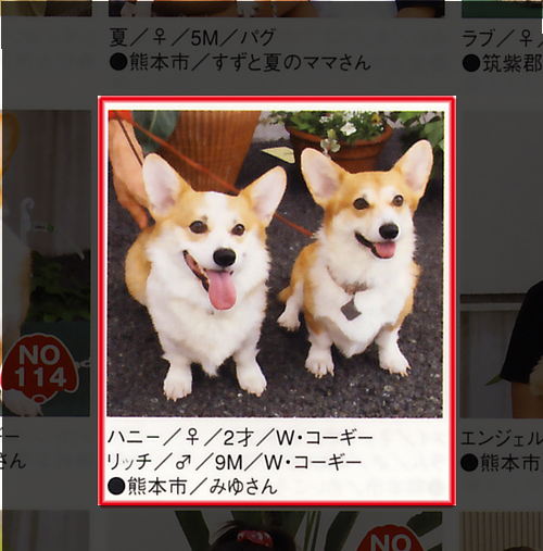 kichikichi090205.jpg