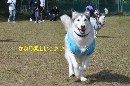 2011100909a.jpg