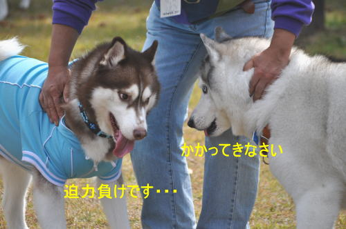 2011100919a.jpg