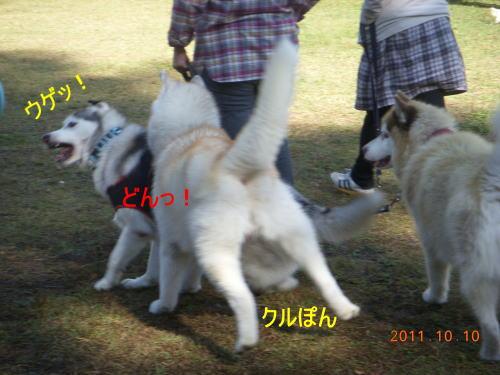 2011101005.jpg