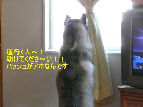 2011101611.jpg